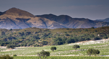 Potrero Vineyard
